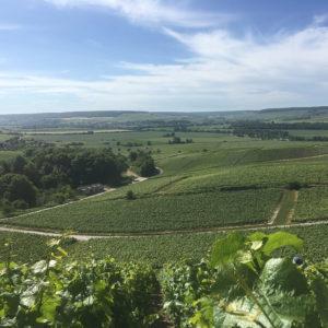 vigne La Marne